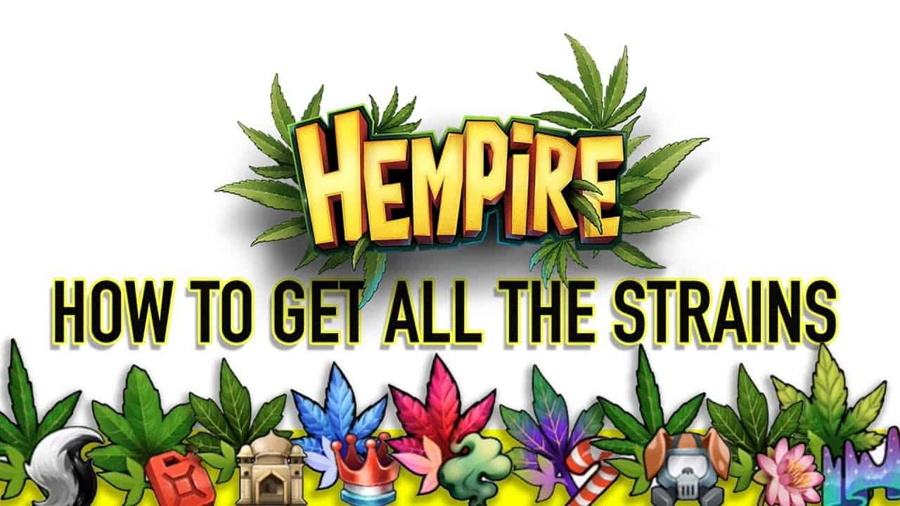 The definitive guide to Hempire Strains   TapTapGaming